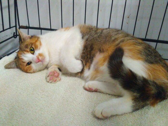 Moje Jasło - kotka do adopcji