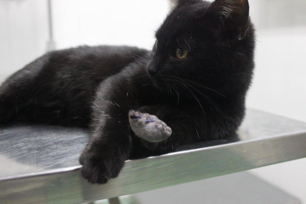 Diablik - kot do adopcji Moje Jasło