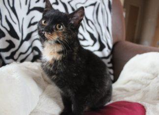 kotka do adopcji