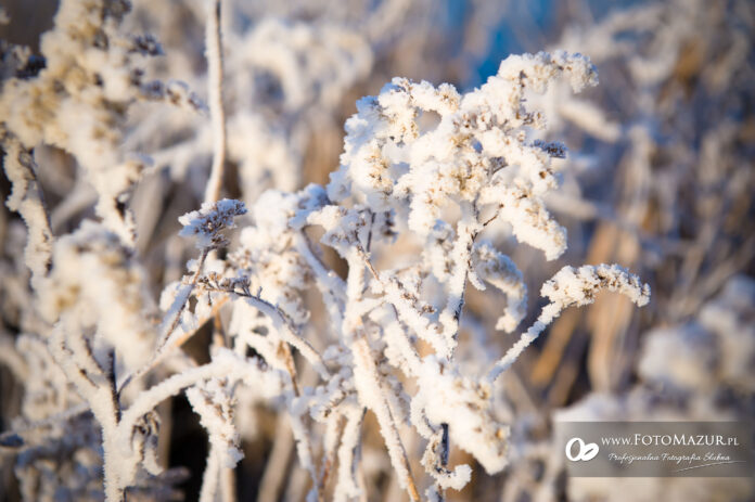 Jasło zimą 4