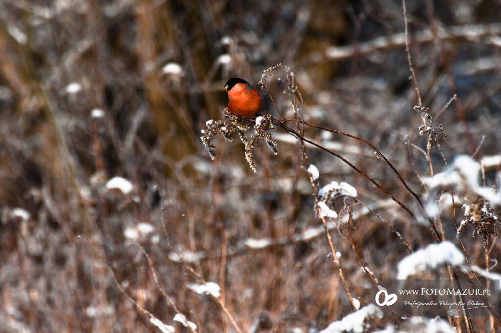 Jasło zimą 9
