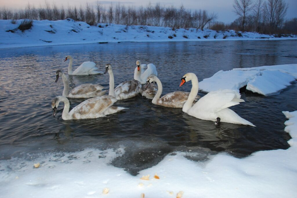 Jasło zimą DSC_0116