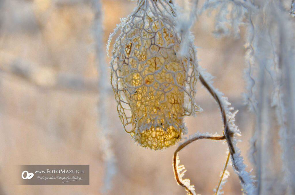 Zima w Jaśle 2