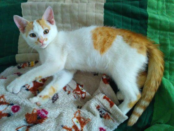 Kot wyłapany na osiedlu Gamrat