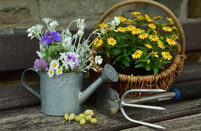 Piękny ogród - Moje Jasło
