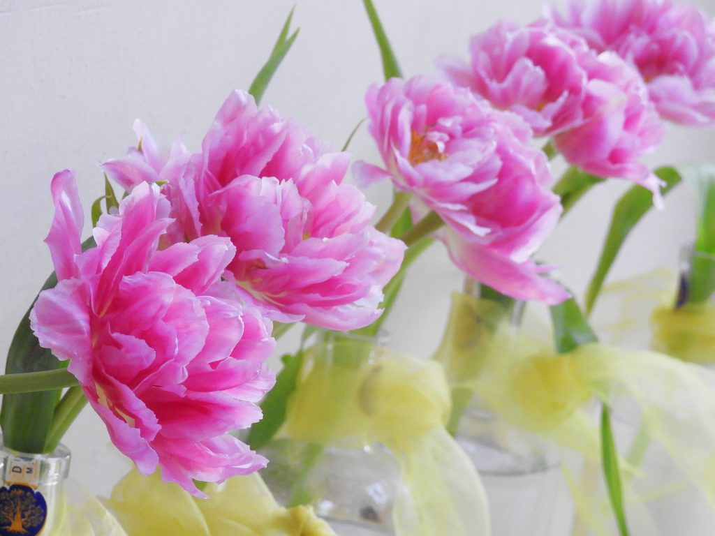 Tulipan pełny