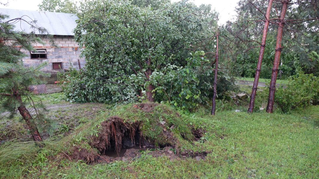 Powalone drzewo - nawałnice Jasło