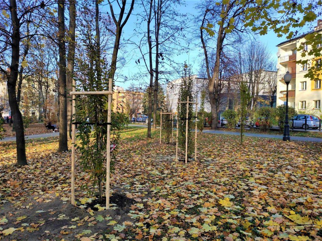 Park Miejski - graby pospolite kolumnowe