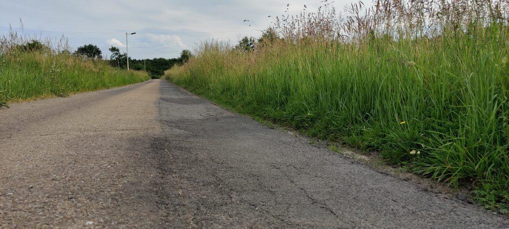 Ulica Bryły w Jaśle - wysokie trawy